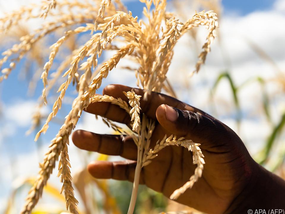 Extremwetter sorgt für Ernteeinbrüche im Süden Afrikas