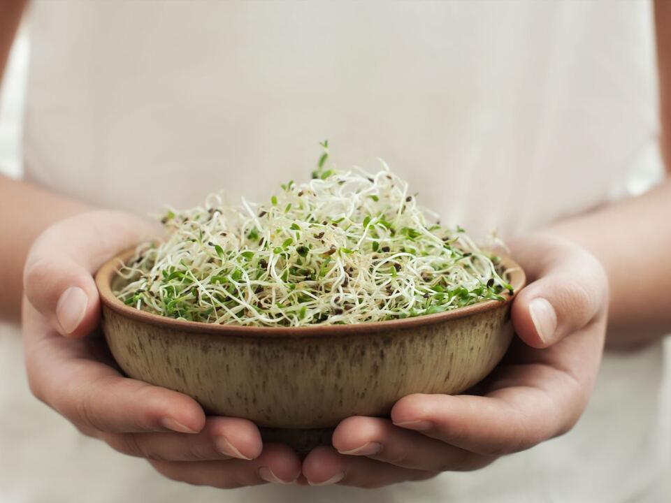 keimling bio vegan essen