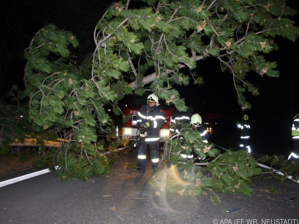 Auf Straßen gestürzte Bäume bereiteten Probleme