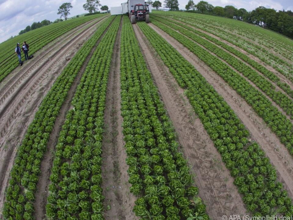 Die Bio-Anbaufläche steigt