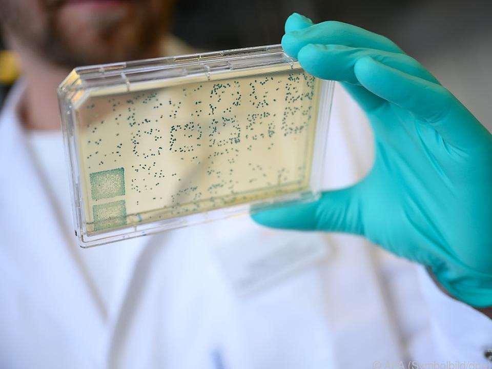 Träger mit Bakterien