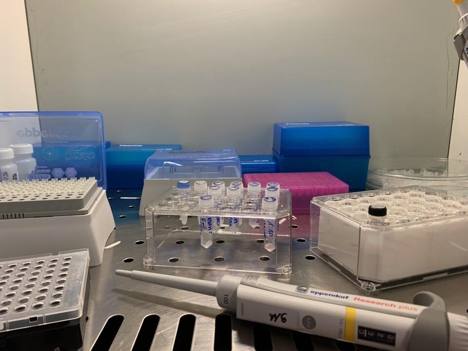 Test_coronavirus_4