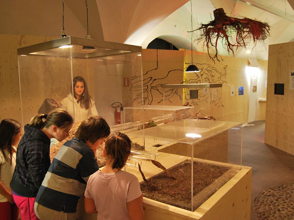 Ameisenhaufen im Naturmuseum2