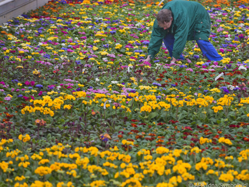 Der Gartenfachhandel würde gerne aufsperren
