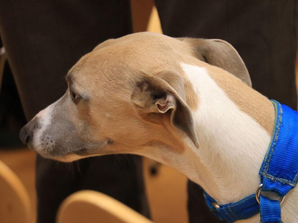 1063101_sill_cane_veterinario