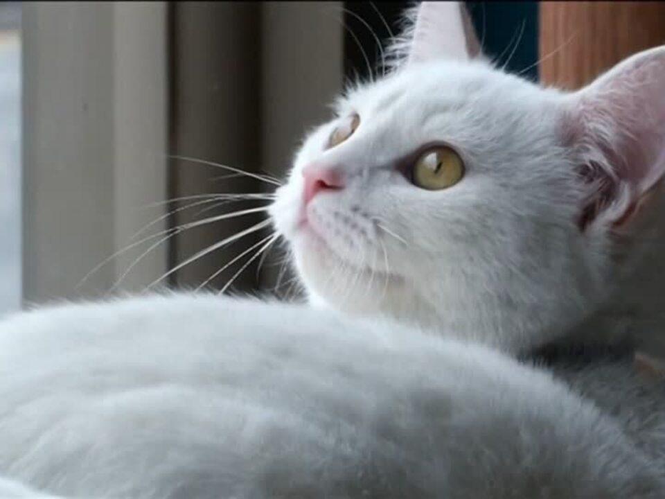 Corona: Zwei New Yorker Katzen positiv getestet