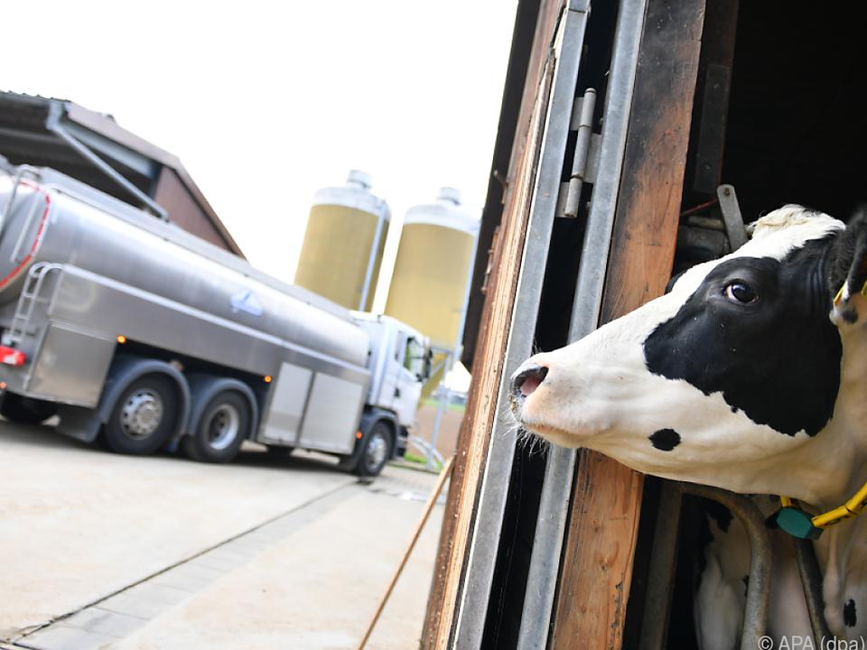 Die EU macht sich Gedanken über den Milchmarkt