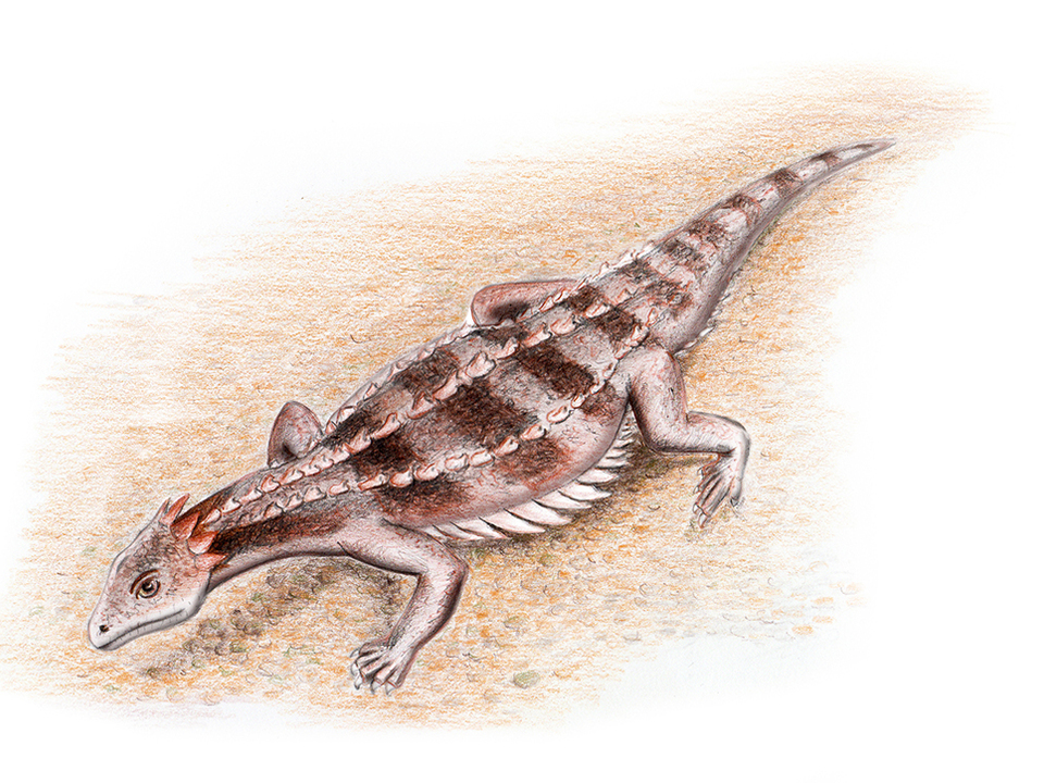 Eusaurophargis dalsassoi. Rekonstruktion Silvio Renesto