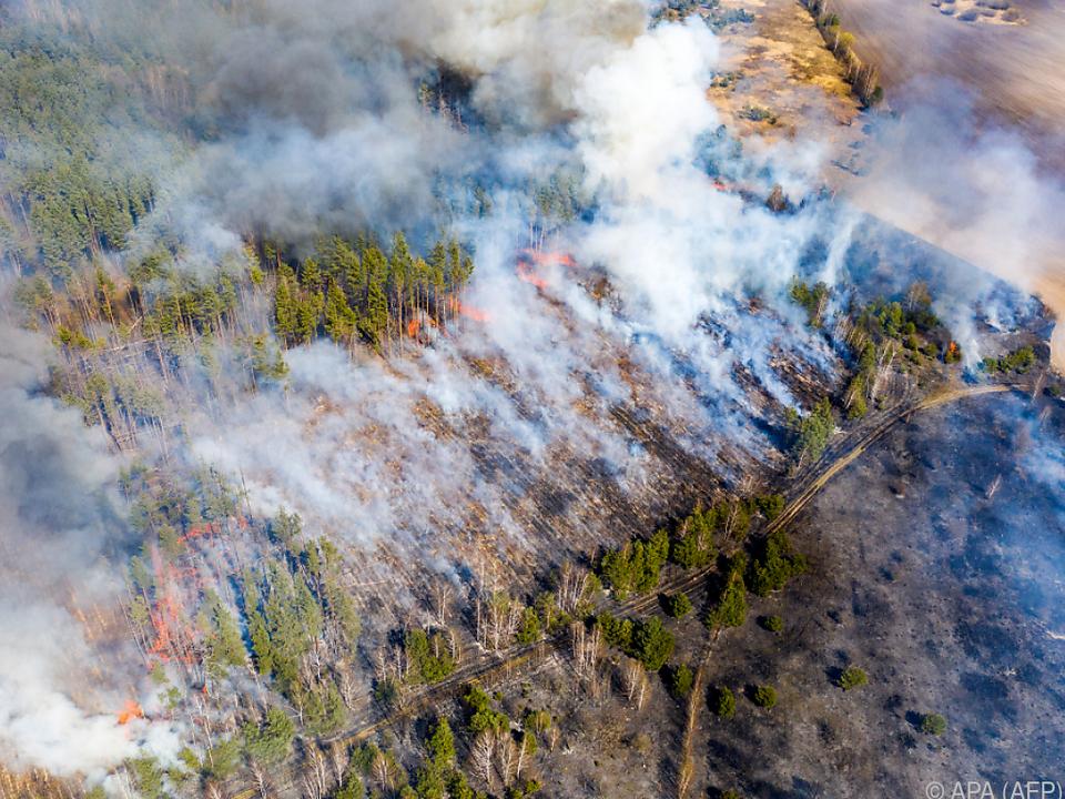 Verheerende Waldbrände in der Nähe von Tschernobyl