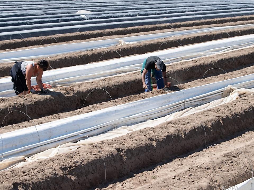 Immer mehr Italiener helfen in der Landwirtschaft aus