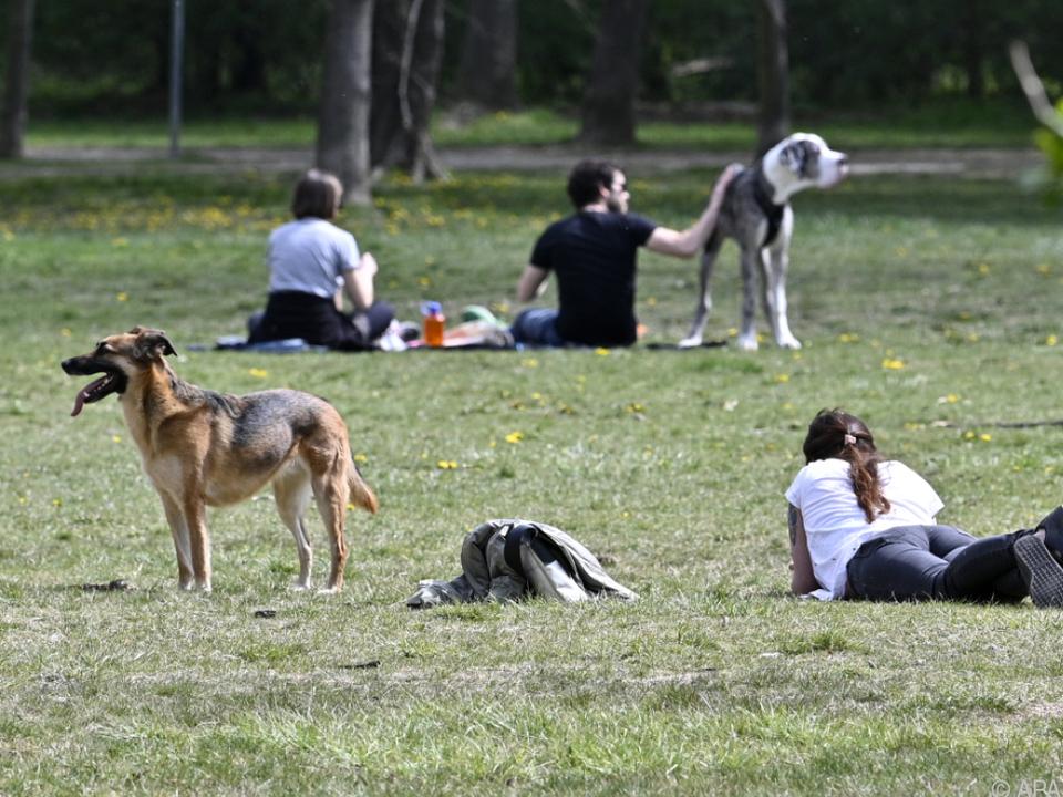 Sehr warm war es vor allem in westlichen Ländern Europas Hund sym freizeit park frühling