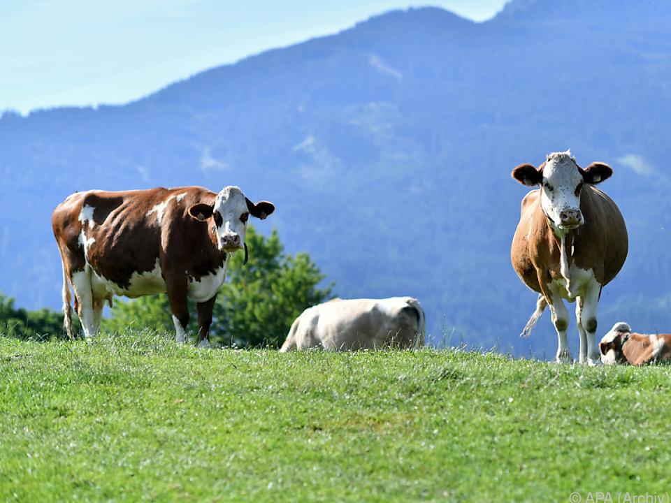 Teilschuld von Landwirt und gestorbener Hundehalterin bestätigt