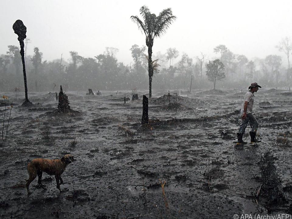 Verbrannte Erde statt Bäume