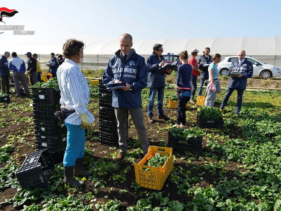 Landwirtschaft, Ausbeutung, Caporalatoathesiadruck2_20200608183100792