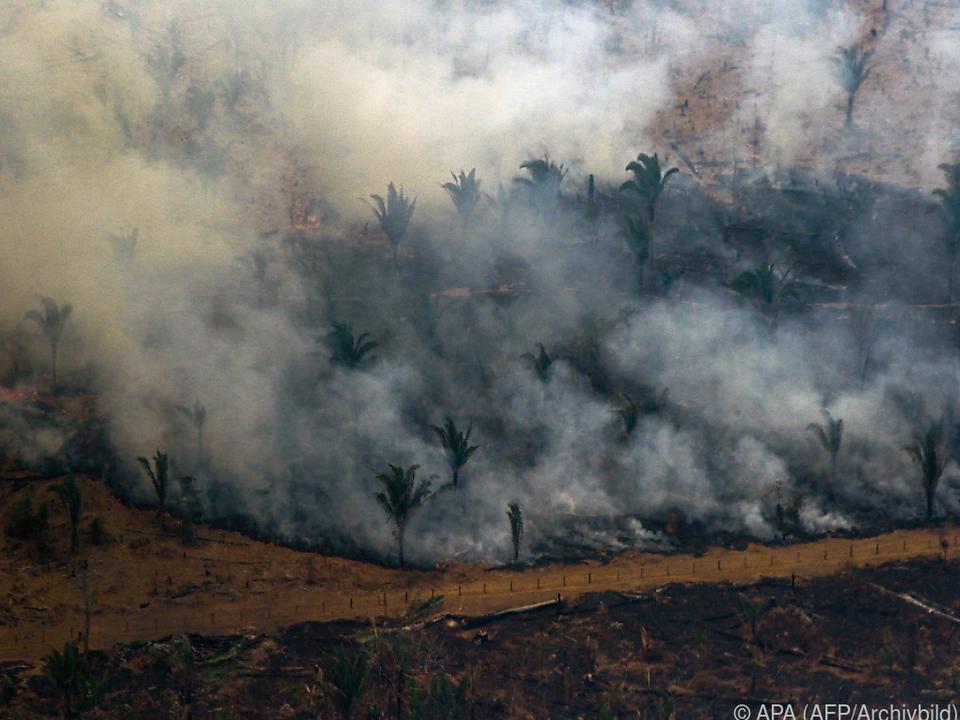 Auch vergangenes Jahr gab es schlimme Brände im Amazonas