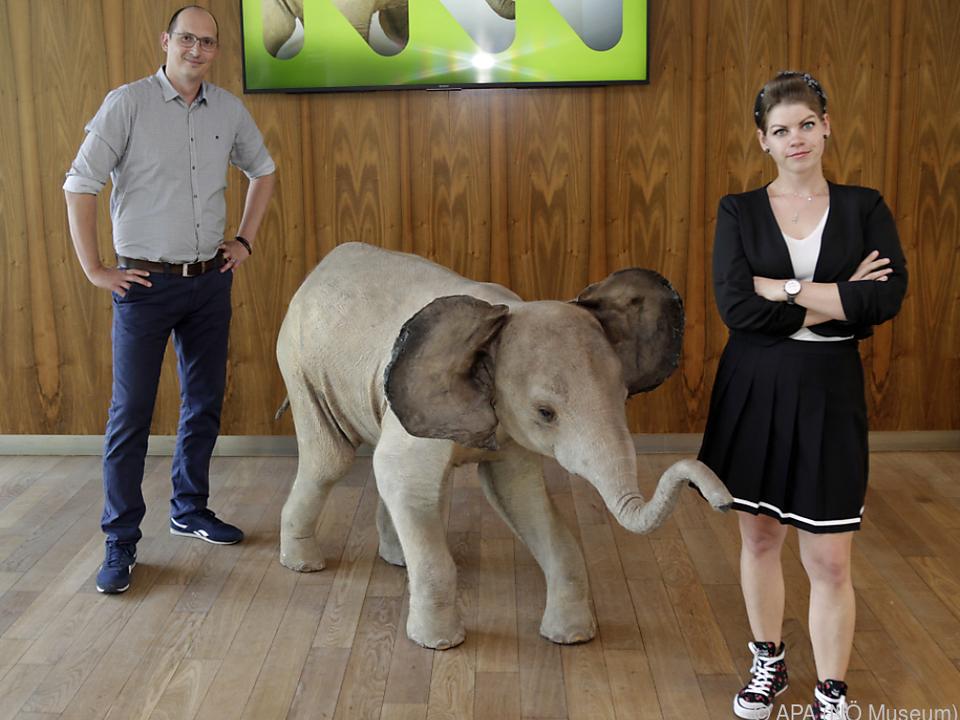 Der Babyelefant erinnert im NÖ Museum an den Sicherheitsabstand