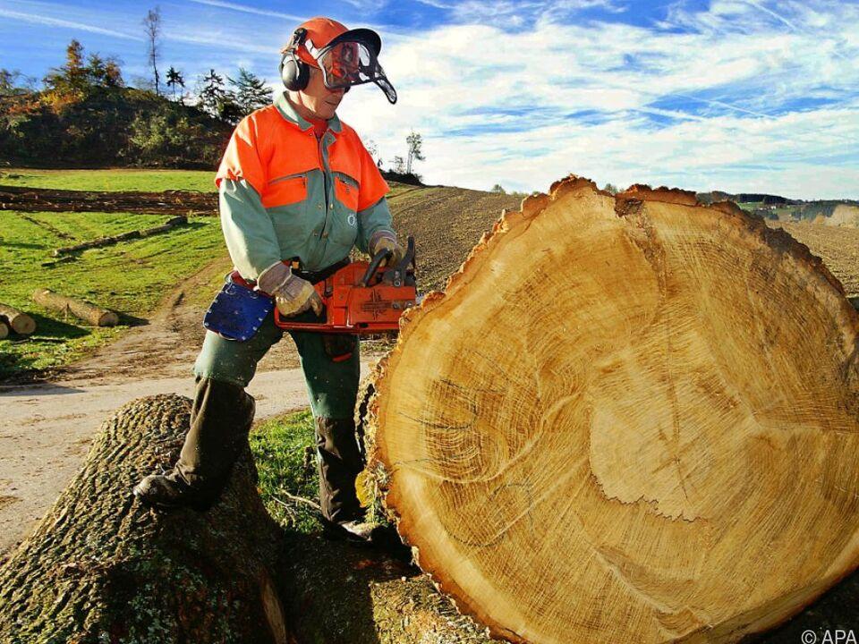 kettensäge motorsäge waldarbeit Holzindustrie befürchtet Milliardenverluste