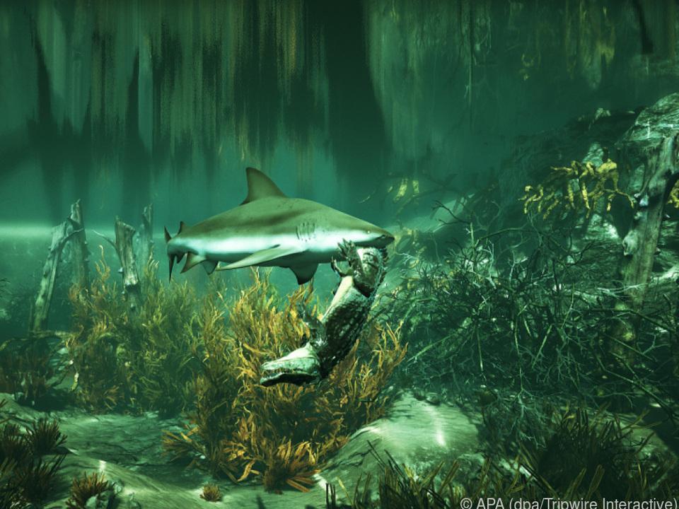 Als Hai legt sich der Spieler auch mit anderen Tieren an