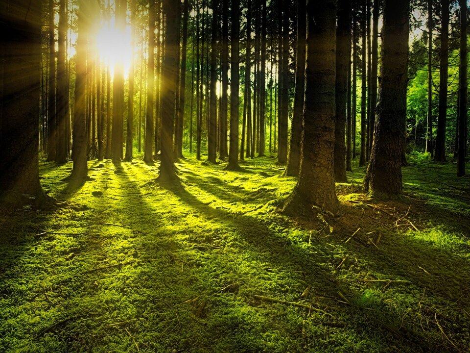 Wald Natur Sonne