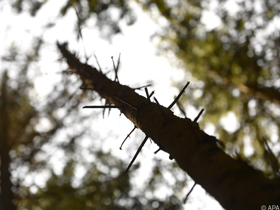 Borkenkäfer und  Corona-Krise machten Forstwirtschaft zu schaffen