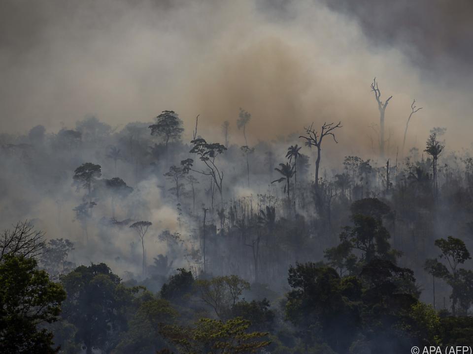 Brasiliens Regenwald schrumpft durch Feuer und Abholzung