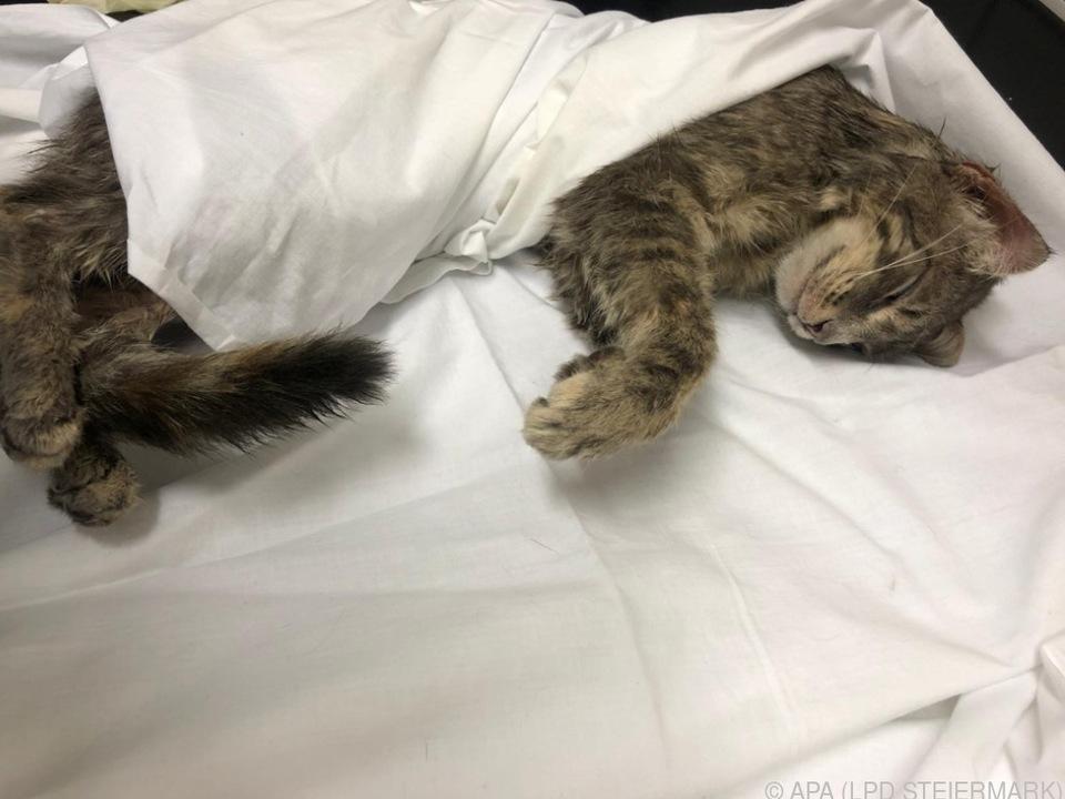 Die Katze war lebendig zum Teil gehäutet worden