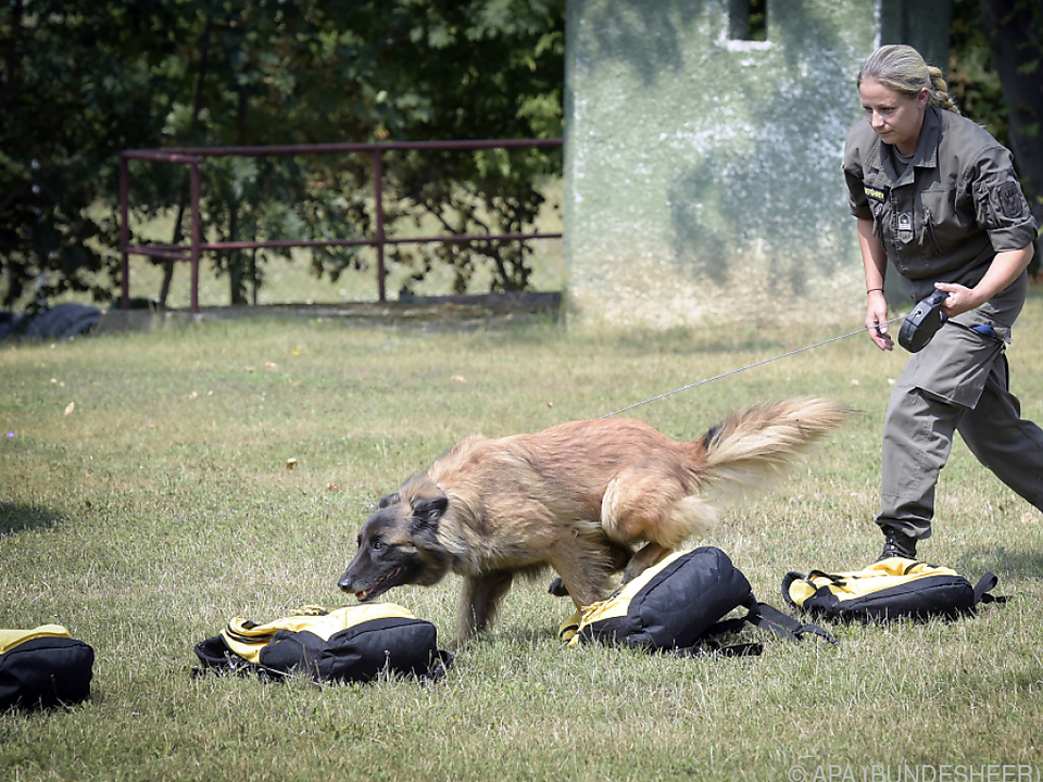 Eigens ausgebildete Spürhunde sollen helfen