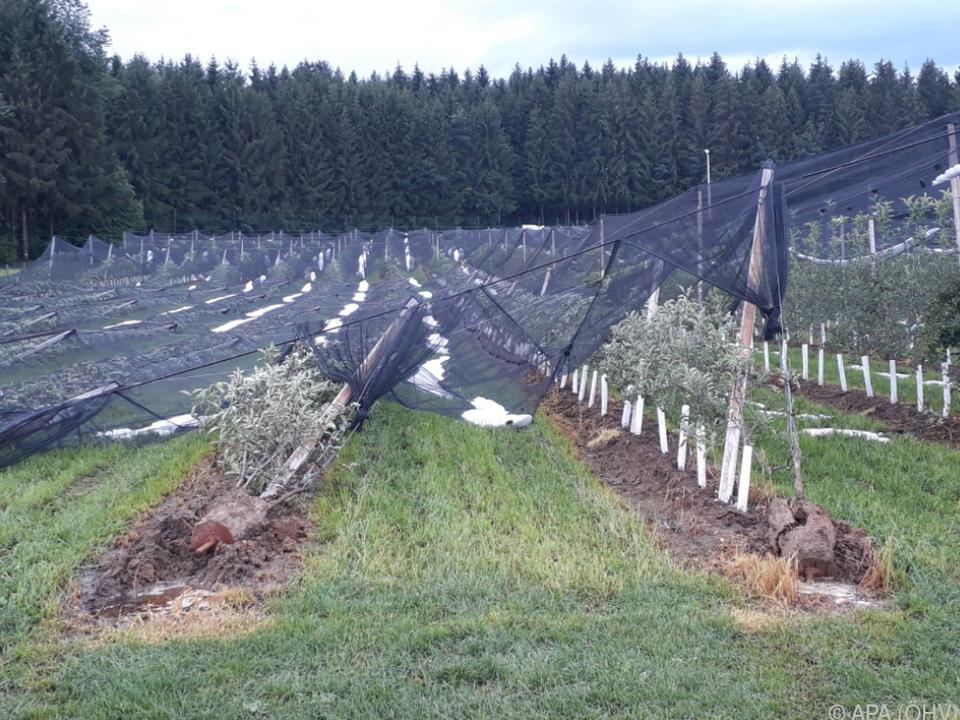 Obst- und Weinanlagen wurden in Mitleidenschaft gezogen
