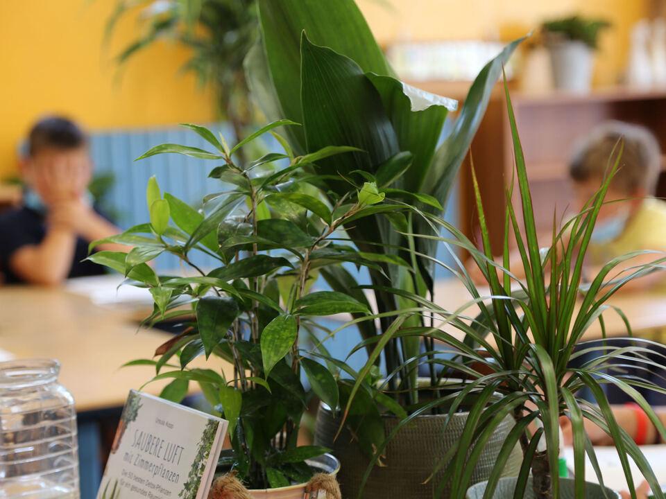 Piante_Pflanzen_Scuole Pestalozzi Schule
