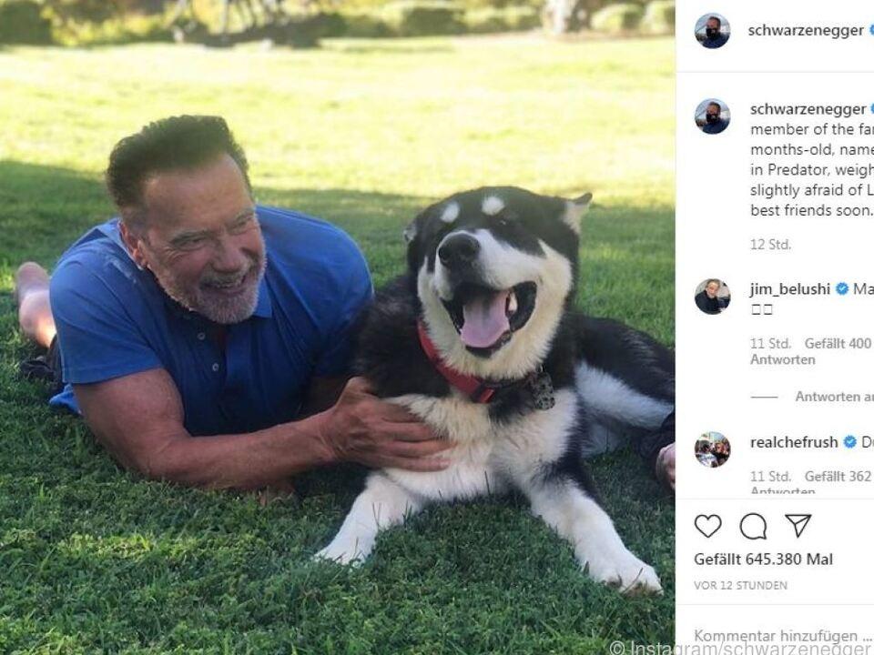 Schwarzenegger ist sehr tierlieb