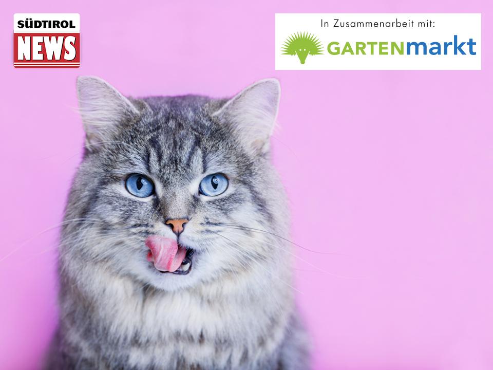 Südtirol News Katzen Contest_lila