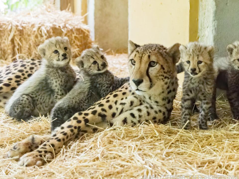 Die vier Neuankömmlinge samt Mama