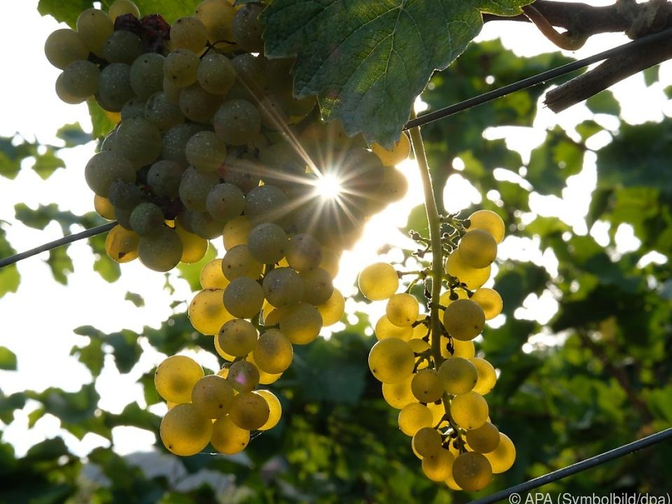 Die Weinwirtschaft wurde von der Coronakrise hart getroffen