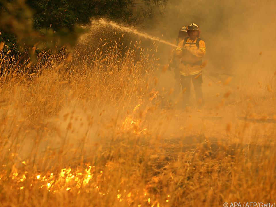 Dutzende Brände zerstören Wälder