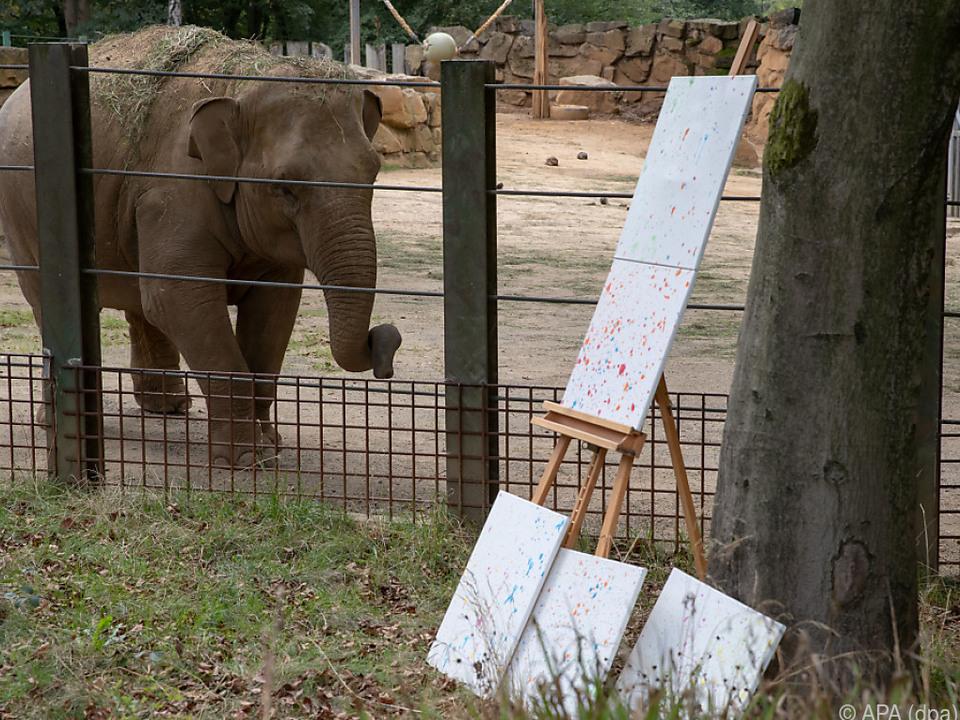 14 Rüssel-Werke Sitas hat der Zoo aktuell noch auf Lager