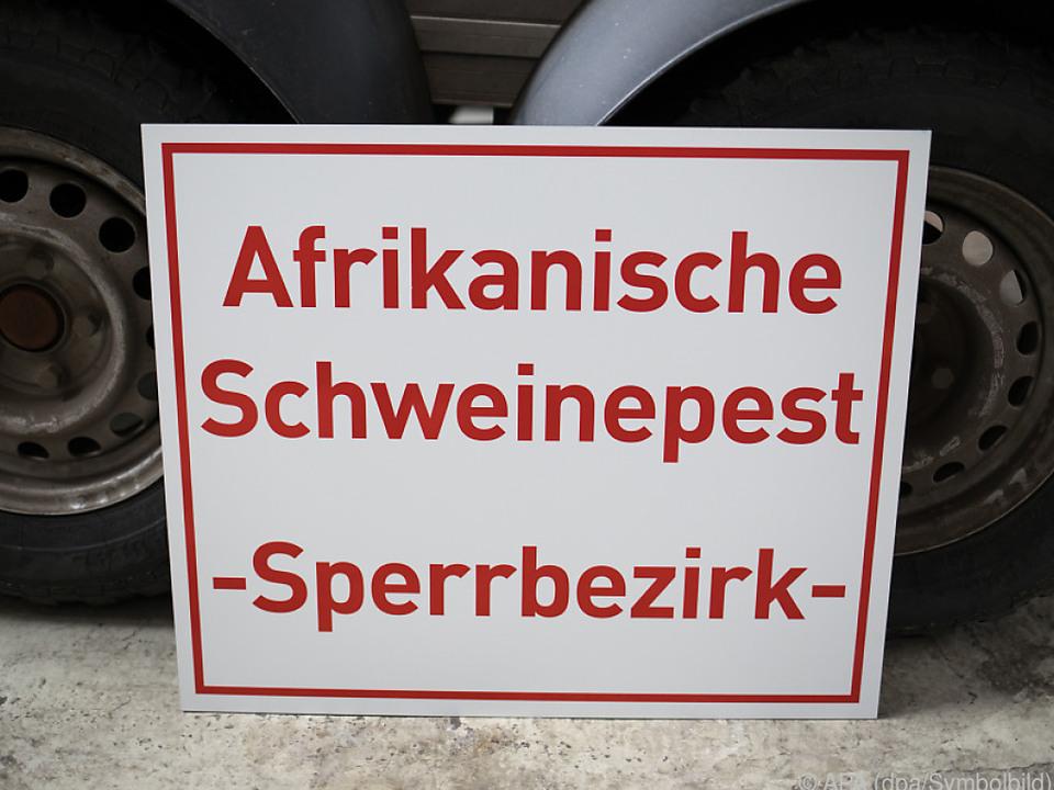 Afrikanische Schweinepest in Deutschland