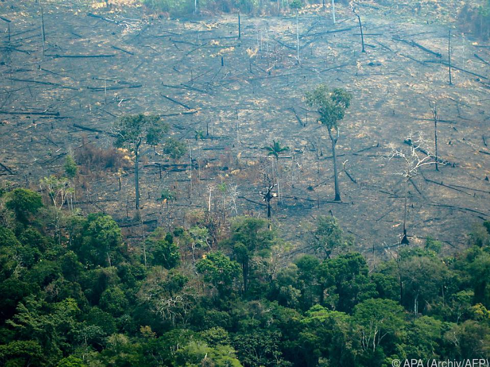 Amazonas wird rücksichtslos abgeholzt