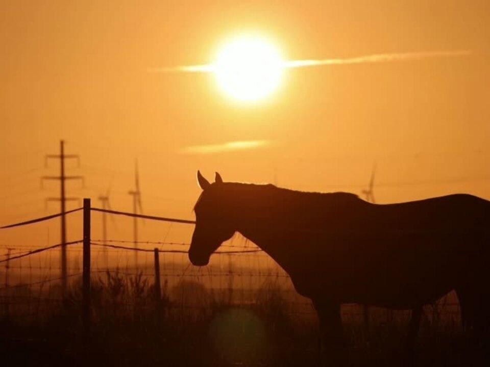 Angriffe auf Pferde: Verdächtiger festgenommen