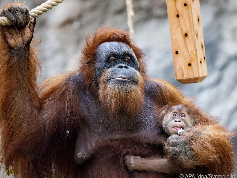 Auch die Affen wollen Grundrechte