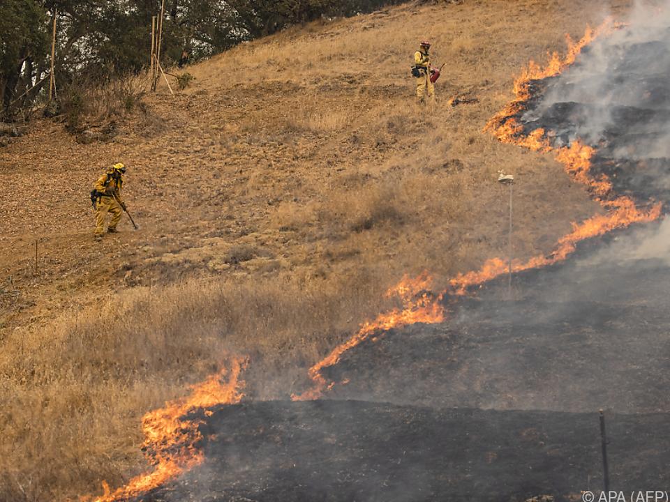 Fast 1.500 Einsatzkräfte kämpften gegen die Flammen an