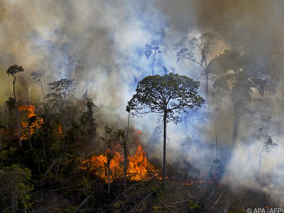 Im September wurden schon 1.000 neue Brände gezählt
