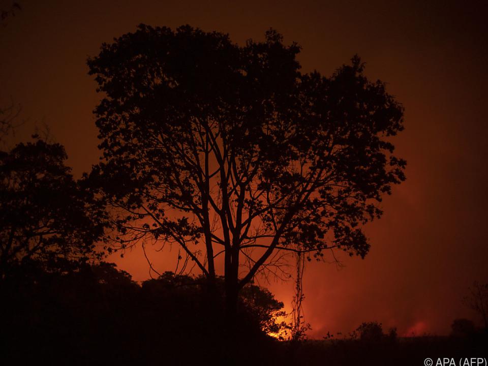 Auslöser der Waldbrände sind häufig illegale Rodungen
