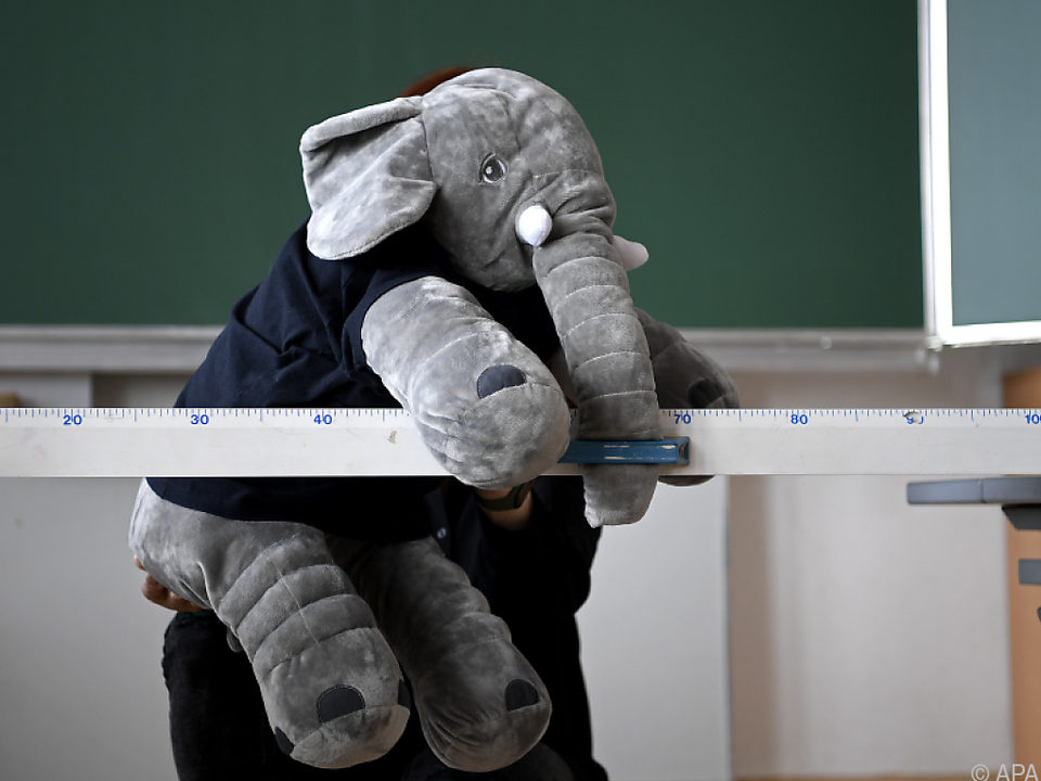 Der Babyelefant ist allgegenwärtig