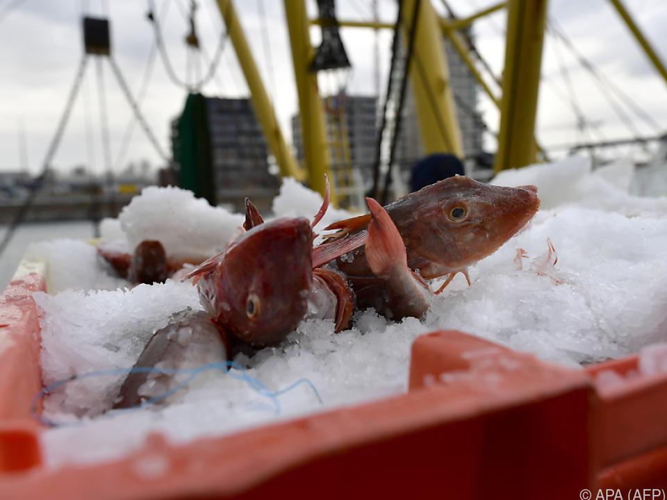 Ein großer Streitpunkt sind die Fangquoten