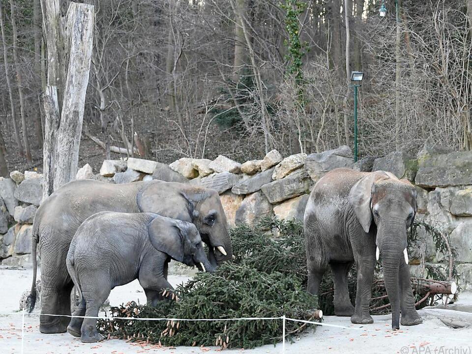 Elefantengehege soll vergrößert und modernisiert werden