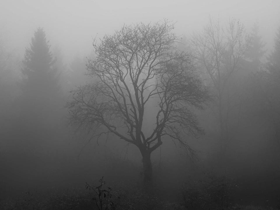 Baum Nebel Moor