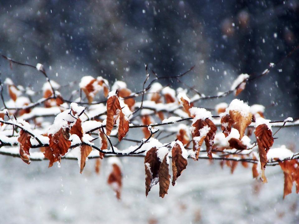 winter Einbruch Herbst Schneeflocken