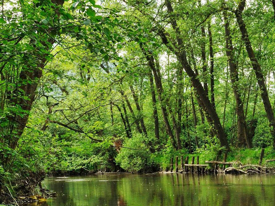 Wald Erle Schluderns