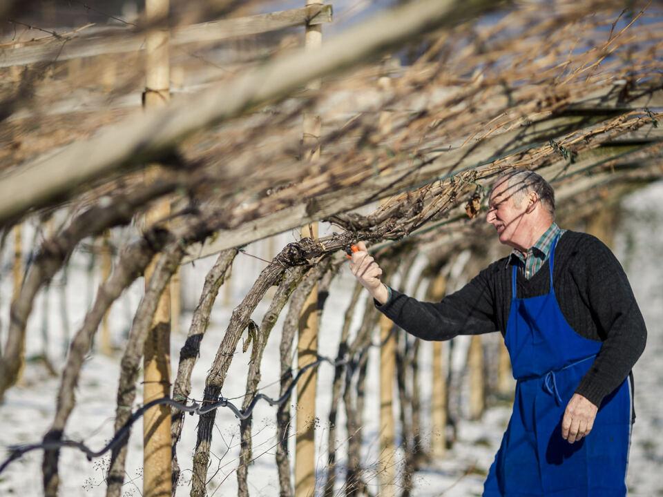 Landwirtschaft Weinbau