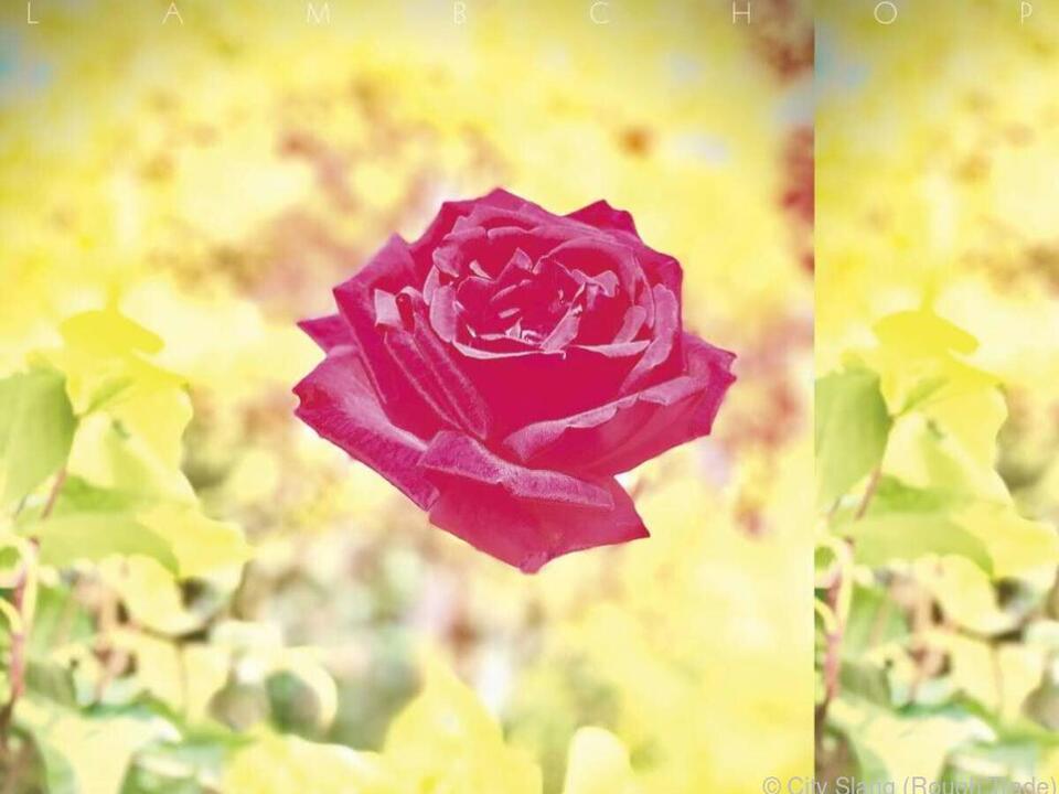 Eine Rose ziert das neue Album \